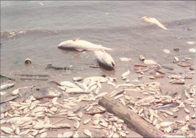 Gulf Disaster